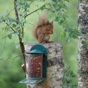 You can see red squirrels