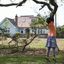 Holiday Cottages in The New Forest to Rent   Self Catering New Forest