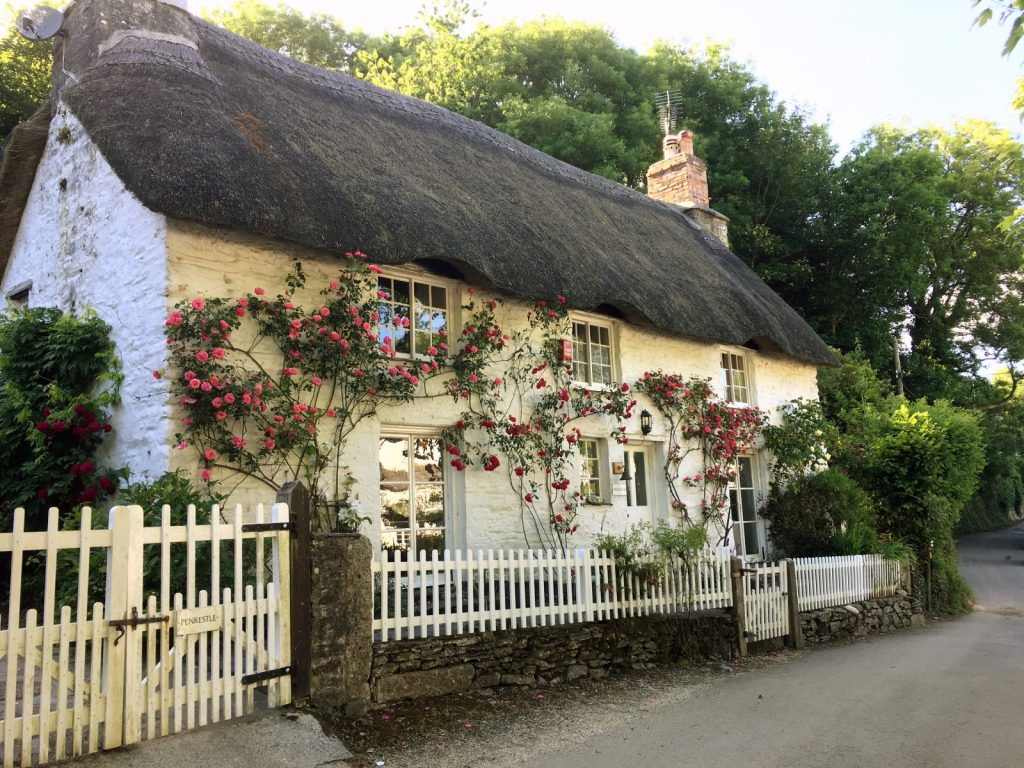 Pretty white thatched cottage with roses growing up the front