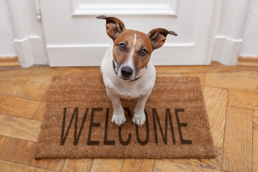 Terrier dog sitting on welcome mat