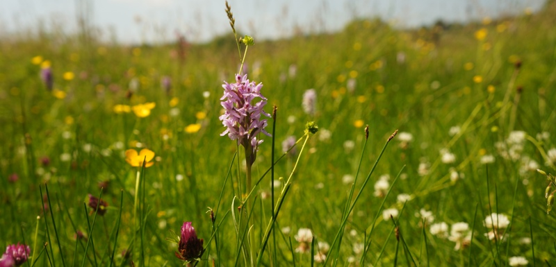 Orchid and meadow flowers