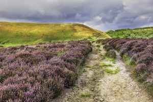 A track cutting across heather clad moorland with green hills in background and grey moody sky
