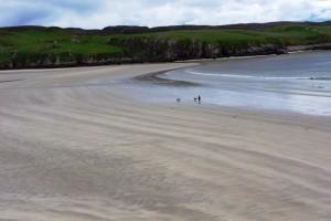 Man walking dogs on sandy beach