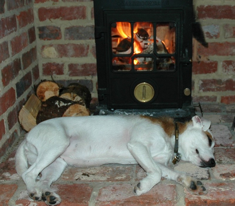 Dog asleep in front of fire