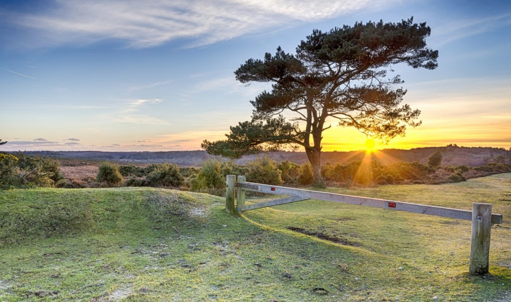 Sun setting behind a tree over the heathland with grass track and wooden barrier
