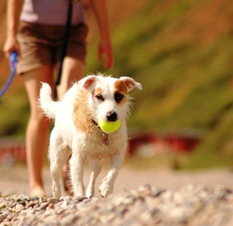 Holiday Accomdation In Yorkshirre Dales Dog Friendly