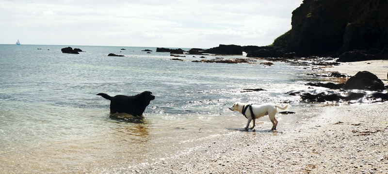 Cornwall S Dog Friendly Holiday Guide Independent Cottages