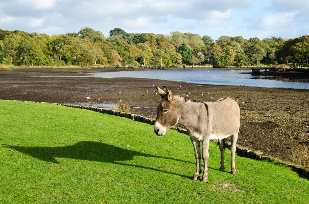 Donkey standing in the sun on the grass in front of a pond