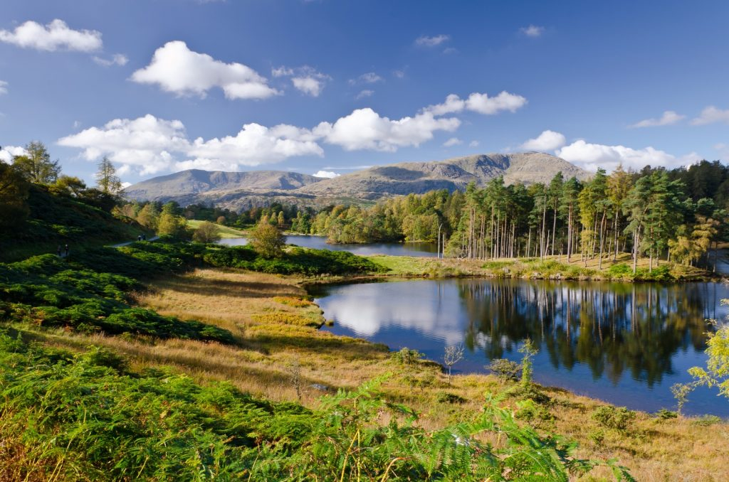 Tarn Hows Lake surrounded by trees and mountains