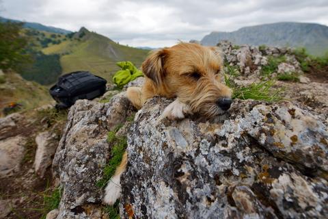 dog sleeping on rocks