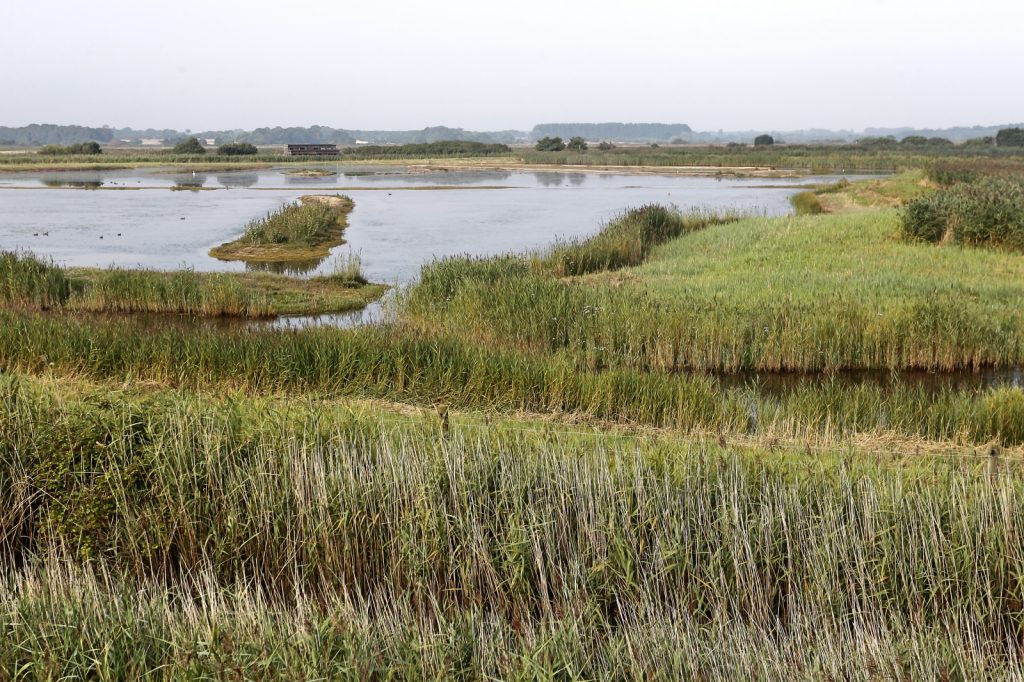 Reed beds and lakes beyond