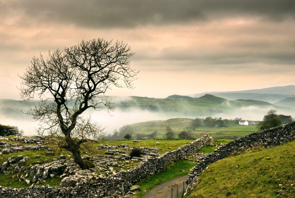 Mist sitting above the green rolling hills of the Dales with drystone walls and a tree